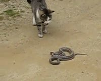waptrick.com Cat vs Snake Fight
