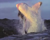 waptrick.one Slow Motion Shark Attack