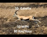waptrick.com Top Ten Fastest Animals In The World