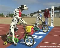 waptrick.one Funny Dogs on Tricycles - Guinness World Records Classics