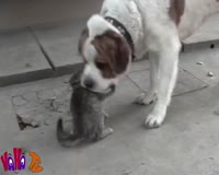 waptrick.com Funny Animal Videos Home Videos