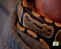 waptrick.one How To Help A Snake Shed Its Skin