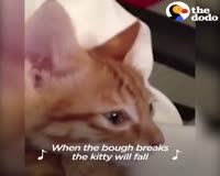 waptrick.one Kitten Singing Lullabies With Mom