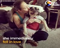 waptrick.com Mother Dog Found Tied Up In Park Finally Has A Real Home