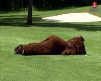 waptrick.one Bear on the Golf Course