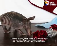 waptrick.com Tiny Armadillo Is Obsessed With Taking Baths