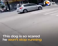 waptrick.com Animals Trapped In Traffic Get Saved By Brave People