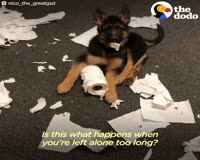 waptrick.com Puppy Born With Straight Legs Makes His Mom s Heart Melt - NICO