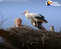 waptrick.com Man Does Everything For His Rescued Stork