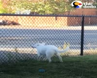 waptrick.com Blind And Deaf Dog Can Sense When Dad Comes Home