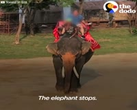 waptrick.one The Scary Truth About Elephant Rides