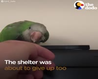 waptrick.one Woman Saves Parrot No One Would Take A Chance On