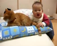 Funny - Asian Baby Is Eating Cat s Tale