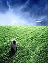 waptrick.one Football Wp