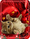 waptrick.one Valentine Kitty