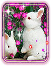 waptrick.one Funny Bunnies Live Wallpaper