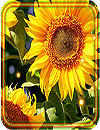 waptrick.one Sunflowers Summer Live Wallpaper