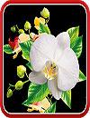 waptrick.one Orchids Wallpaper