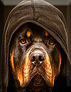 waptrick.one Rottweiler Wallpaper