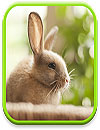 waptrick.one Cute Animals Live Wallpaper