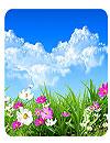 waptrick.one Flower Spring