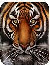 waptrick.one Tigers
