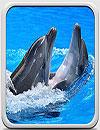 waptrick.one Dolphins