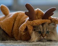 Funny Cat Kitten Daisy kostium