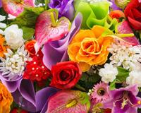 Антуриум Цветя