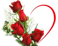 گل رز و قلب