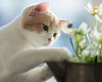 Cat Controls Flowers