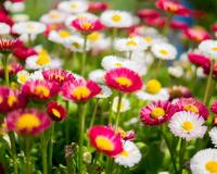 Цветя Градина Colorful