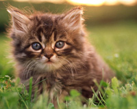 Sweet Kitty On Grass