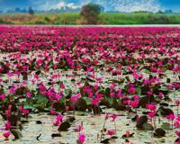 Tailand Lotus Lake