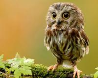 Cute Sweet Confused Owl