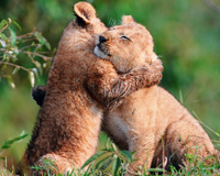 Huging Big Cats Bayi