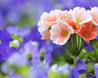 Beautiful Flower Pictures And Wallpaper