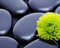 Flower Stones Plant