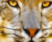 Yellow Eyes Tiger