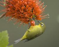 Lule dhe zogj