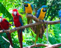 Parrots Colorful