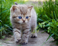 Beautiful Cute Cat