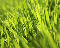 Plants Grass Plants
