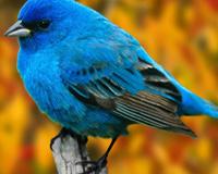 Super Bird 01