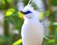 Birds Tropical
