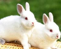 Cute Rabbits 01