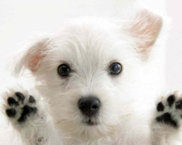 Cute Dog Images Contest