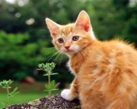 Śliczne Żółty Kot