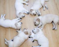 Cute Star Puppies