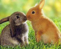 Kissing Rabbits